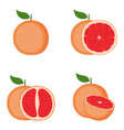 grapefruit whole fruit half slice vector image vector image