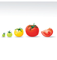 tomatos vector image vector image