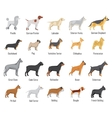 Dogs breed flat icons set vector image
