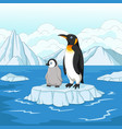 cartoon mother and baby penguin on ice floe vector image vector image