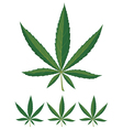 cannabis leaves over white background vector image