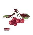hand drawn cherries vector image vector image