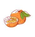 ripe orange isolated icon vector image vector image