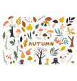 set colorful autumn leaves in cartoon style vector image