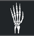 skeleton hand with bones vector image vector image
