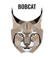 portrait of bobcat isolated on vector image
