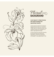 Blooming lilies vector image vector image