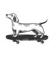 dog on skateboard engraving vector image vector image
