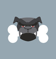 Scary Dog head Angry Bulldog and bone Pet head vector image