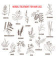 medicinal herbs for hair loss treatment vector image vector image
