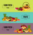 organic farm product posters set vector image