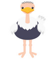 ostrich on white background vector image