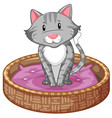 gray cat in basket vector image vector image