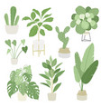 interior home indoor plants set vector image