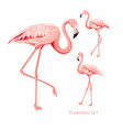 tropical birds collection pink flamingos set vector image vector image