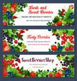 fresh sweet berries on banners vector image vector image