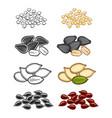 popular seeds sketch line vector image vector image
