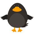 black bird on white background vector image