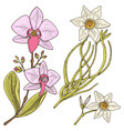 daffodil and orchid with leaves and buds wedding vector image