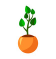 cartoon green house plants in pots set leaf and vector image vector image