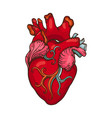 drawing of stylized human heart vector image vector image