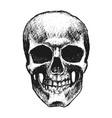 hand drawn skull vector image