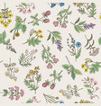 Seamless pattern of various hand drawn herbs and vector image