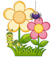spider and caterpillar in flower garden vector image