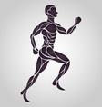 Anatomy Drawing of a Human Man vector image