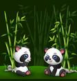 cartoon bapanda in jungle bamboo vector image vector image