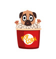 cute funny pug dog character inside a basket of vector image vector image