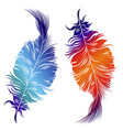 design of decorative feathers vector image