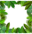 jungle background with palm leaves and space vector image vector image