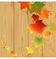 foliage vector image vector image