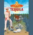 tequila production agave growing and harvesting vector image vector image