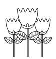 tulip flowers decoration natural romantic vector image