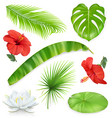 Jungle Set of leaves and flowers Tropical plants vector image