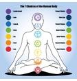 seven chakras of the Human body vector image