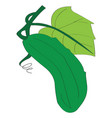 image of a green cucumber vector image