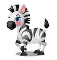 cute baby zebra isolated on white background vector image vector image