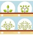 Dichotomous branching plants banner vector image