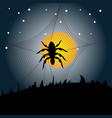 Halloween spider background vector image