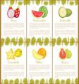 papaya and watermelon ambarella carambola poster vector image vector image