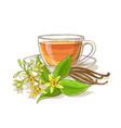 vanilla tea vector image vector image