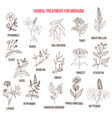 collection of medicinal herbs for migraines relief vector image vector image