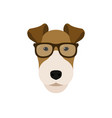 fox terrier dog in glasses cute dog vector image