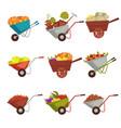 gardening wheelbarrow with harvest vector image vector image