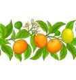 mandarin pattern on white background vector image
