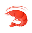 Red shrimp vector image vector image