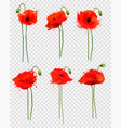 set of a red poppies flowers on transparent vector image vector image